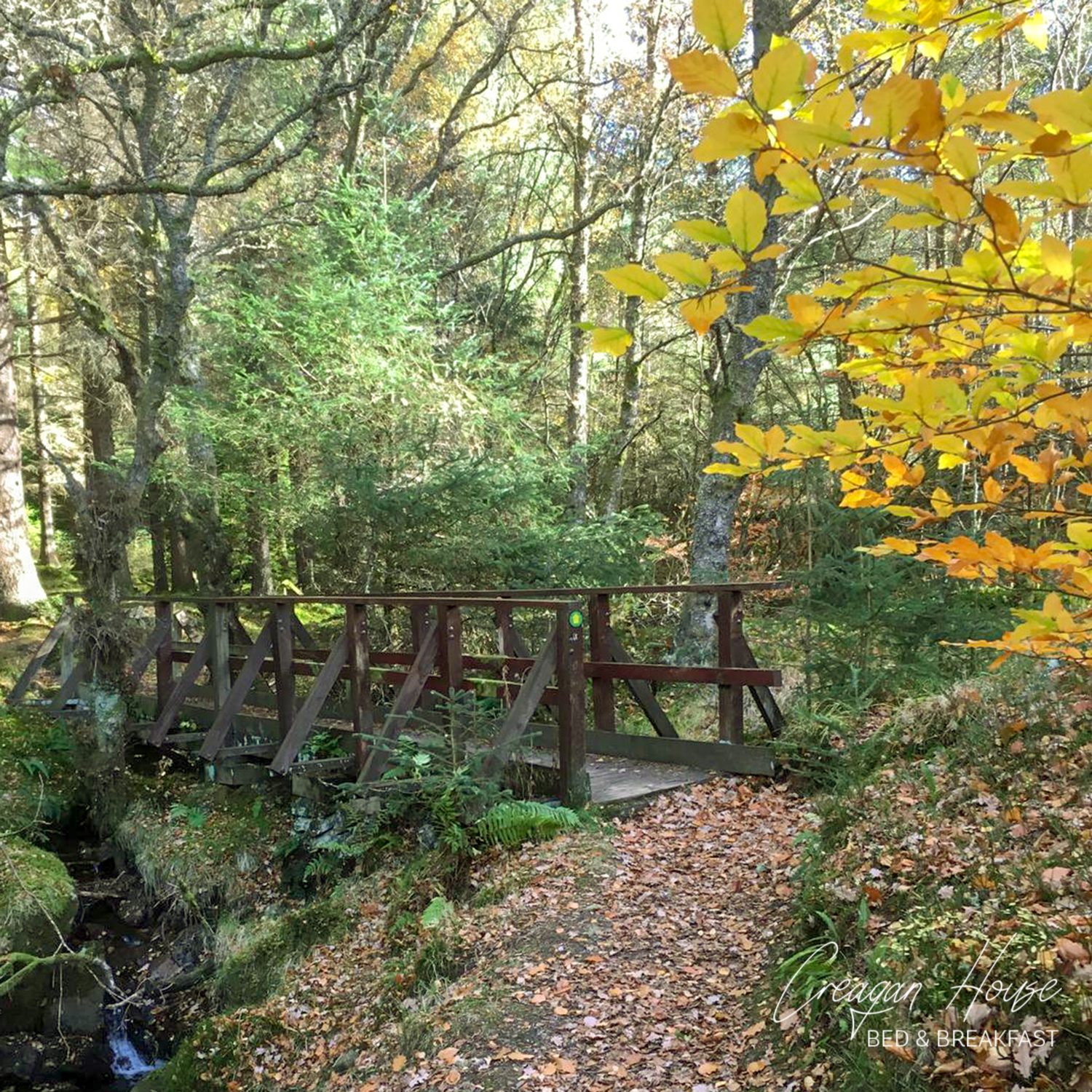 Autumn leaves in Strathyre Forest