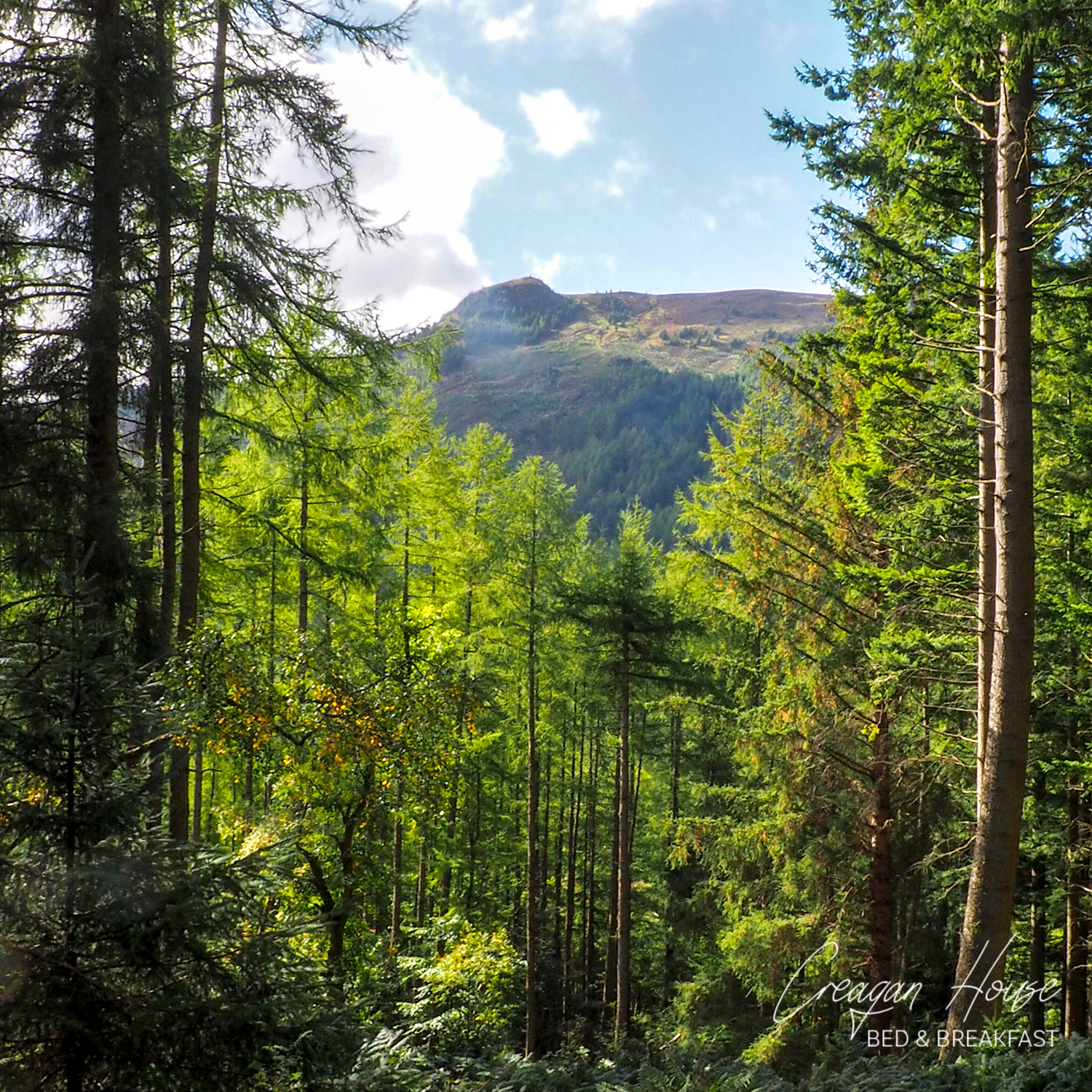 Views from Strathyre Forest