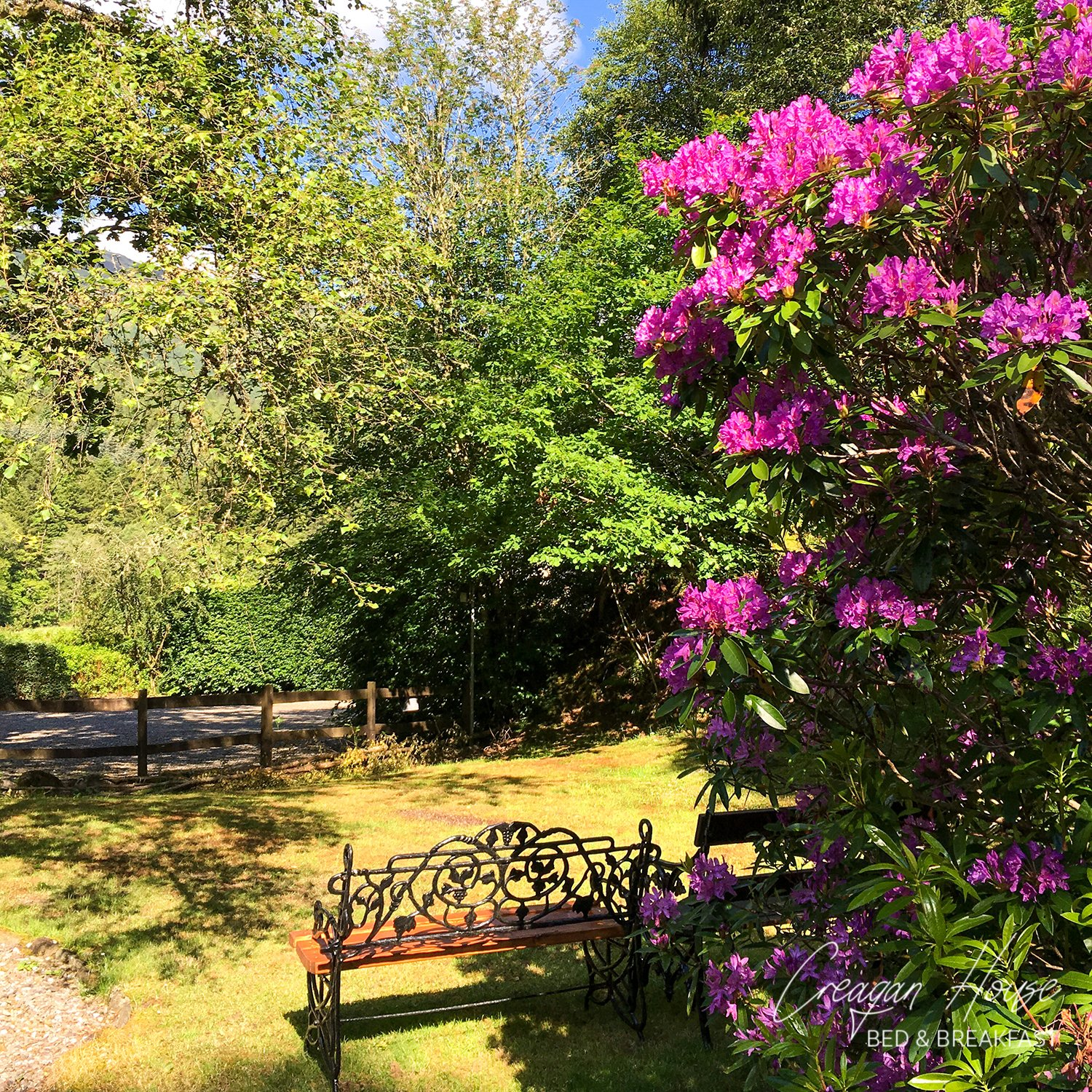 Sit beside the Rhododendrons